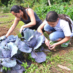 ​Office of Hawaiian Affairs gives $7.4M to education, housing, obesity prevention efforts