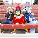 Behind the scenes: Fredbird, Rampage and Louie pose for this week's cover story (Video)