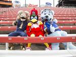 Behind the scenes: Fredbird, Rampage, Louie pose for this week's cover