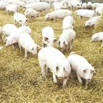 Duke Energy could announce swine-waste project deal by June