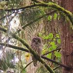 5 things to know today, and meet the baddest owl in Portland