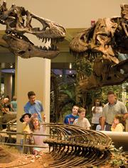 Carnegie Museum of Natural History Dinosaurs in Their Time Exhibit, Oakland, is No. 11 on the list of the region's largest LEED-certified/green projects at 375,000 square feet.