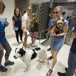Time Inc. employees might be getting a real treat: dogs in the office