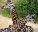 What your business can learn from those Facebook giraffes