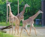 County panel: Approve zoo levy