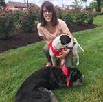 Luxury hotel chain for dogs eyes St. Louis for expansion
