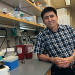 OHSU stem cell scientist reveals another key discovery