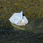 Alderman sees 'loophole' in Chicago plastic bag ban, wants to close it now