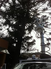 The truck's aerial telescoped up into the monkey puzzle tree.