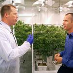 A behind the scenes look of a budding medical marijuana business