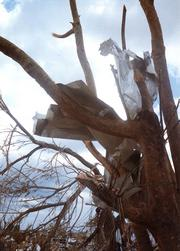 Andrew wrapped sheet metal around a tree.