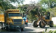 Clean up in Coconut Grove after Hurricane Katrina.