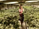 DBJ's best of 2015: Colorado pot growers face sky-high power bills