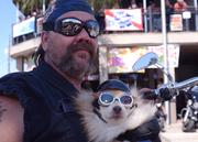 Jack Beretto and his riding partner 'Lil Bear enjoyed a cruise along Main Street. The pair have been riding together for over a year.