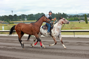 Exercise rider Laurie Ansell rides Inkspot Charlie, taking the thoroughbred for a light workout on the track.