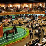 New York breeders expect strong sale at Fasig-Tipton