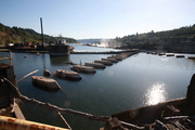 Debris gathers in a lagoon area behind Willamette Falls at Oregon City's Blue Heron paper mill.