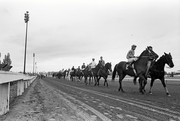 A long line of horses head to the starting gates.