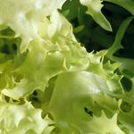 Charlotte investors put $20M into this field-to-fork salad greens grower