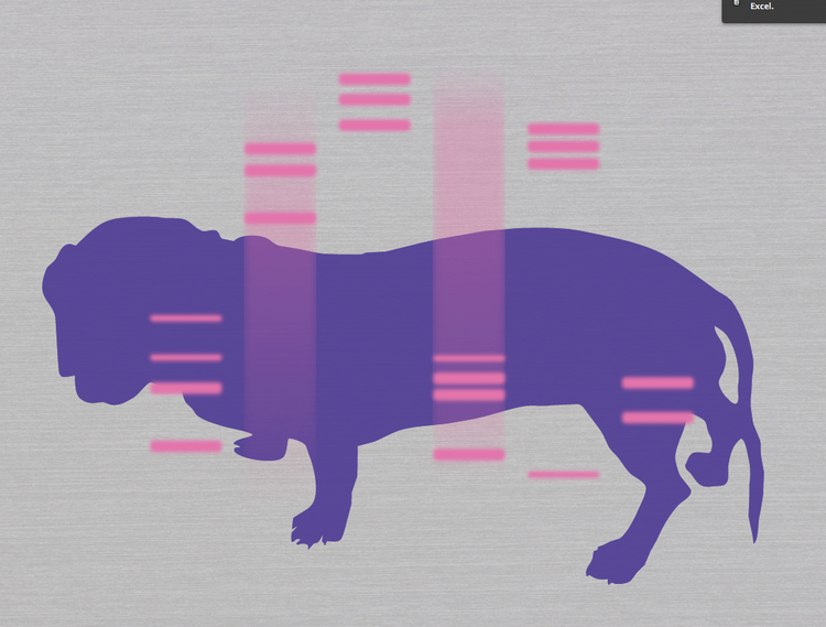 The DNA of a dog, as mapped by DNA on a Shirt.
