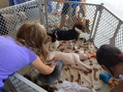 The Faith Phee & Butterbee Foundation offered several puppies for adoption outside the new Petco Unleashed store, which does not sell animals.