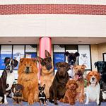 Best Places to Work, micro, second place: Three Dog Logistics