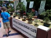 The Central Florida Bonsai Club showed me the ins-and-outs of bonsai trees.