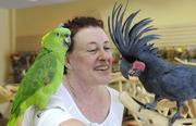 Parrot Planet co-owner Dana Strome plays with a yellow-naped green parrot and a black palm cockatoo. Parrot Planet, which is opening in the former Knotts Pharmacy at 48th and J streets, will sell parrots and their food, cages, vitamins and toys.