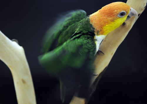 Parrot store offers education along with birds (Video