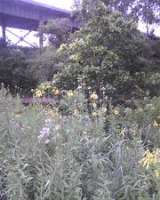 Three Bridges Park preserves some natural character in the Menomonee Valley.
