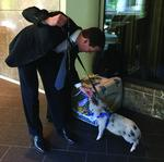 Investment exec's pet pig draws doubletakes
