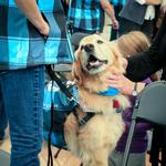 DIA's new dog therapy program expanding, adding 27 new dogs