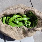 The good and bad news on this year's <strong>green</strong> chile crop