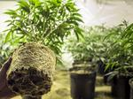 Legal weed firm snatches up 40,000 square feet of NE Portland