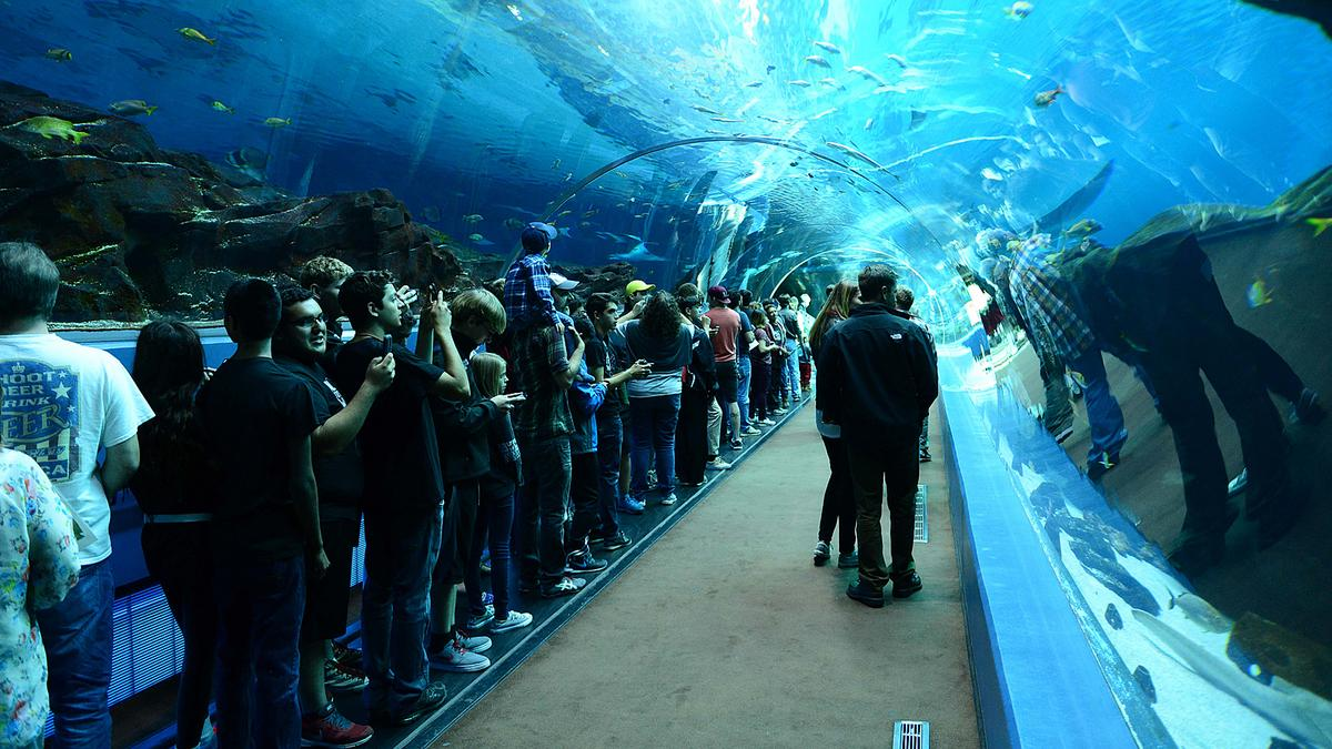 Bien connu Study: Georgia Aquarium has contributed $1.9 billion to state  VJ05