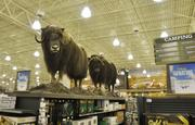 Cabela's in Lone Tree has 250 pieces of taxidermy.