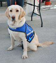 Cinnoman is a therapy dog at the National Sports Center for the Disabled.