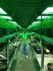Frank Vest is operations manager for Medicine Man, a marijuana growing operation and dispensary at 4750 Nome St. in Denver. The lighting for the plants gives off an interesting green glow.