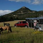 Lazydays mounts new campaign to sell RVs, trailers to equestrian customers