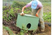 Alicia Rhoades, a habitat conservation plan compliance technician with First Wind, works on a bird enclosure safe haven for the endangered Makamakaole seabird about 10 miles west of Wailuku on Maui.