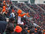 How Bengals ticket costs stack up against other NFL playoff games
