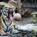 Renew the Zoo Campaign nets $3M in 2015