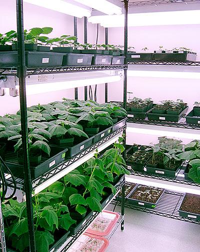 Davis-based Marrone Bio Innovations is a global developer and provider of biologically derived pest management and plant health products.