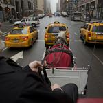 Horse-drawn carriage issue set for City Council vote, but pedicab drivers and others object