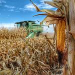 A look at the beauty in Colorado's $40B agriculture industry (Slideshow)