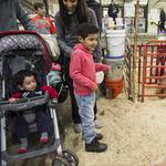 National Western Stock Show scores 2nd-best year (Slideshow)