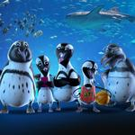 Aquarium's new marketing campaign has some waddle to it