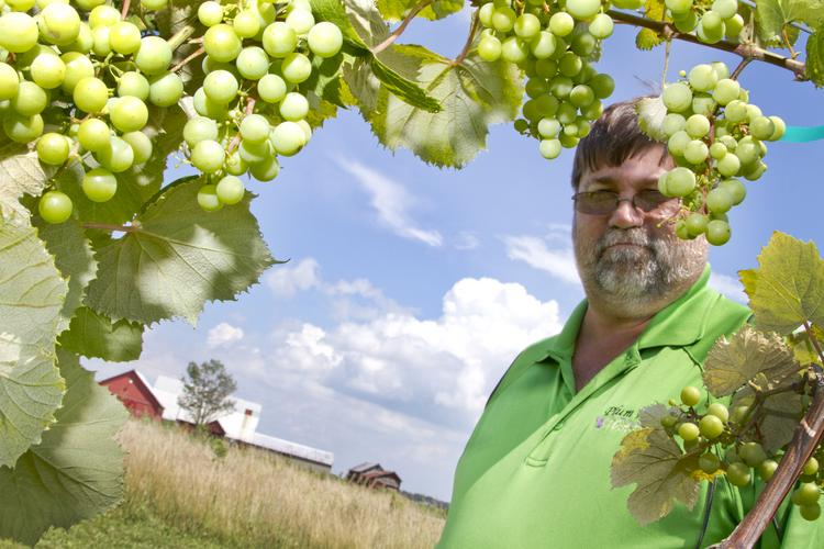 Dave Crosby in a row of his white Niagara grapes. Plum Run Winery and vineyard is in Grove City.