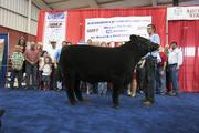 The auction gives Wisconsin breeders a chance to showcase their livestock.
