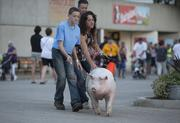Prime pork gets ready to show at the 2013 Wisconsin State Fair.